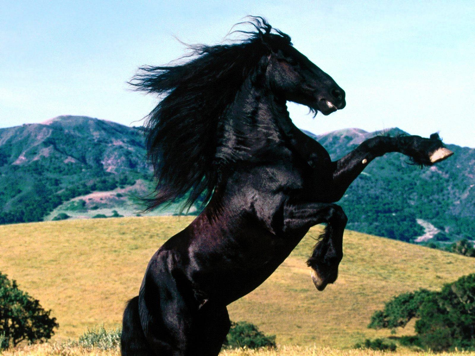 Wallpaper - Paarden
