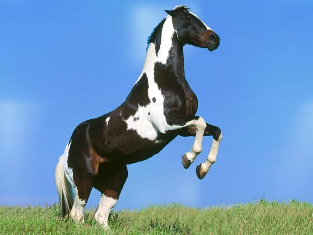 Wallpaper paarden