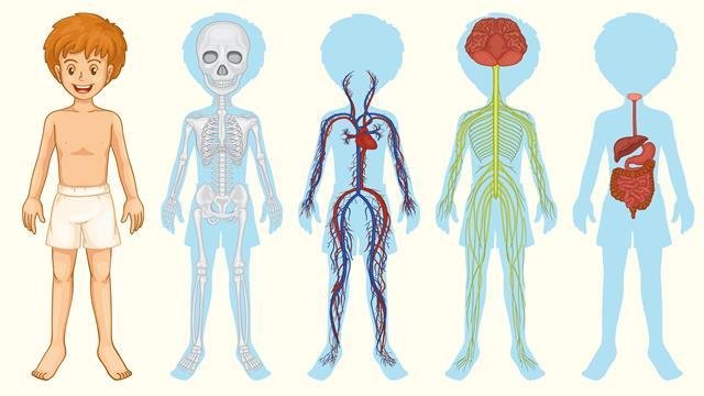Kids-n-fun | 17 Kleurplaten van Menselijk lichaam