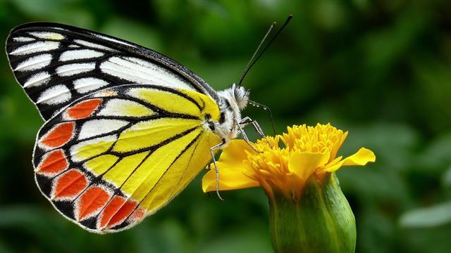 Kleurplaten Bloemen Vlinders Hartjes.Kids N Fun 56 Kleurplaten Van Vlinders