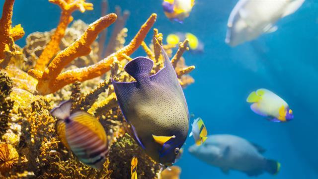 Kleurplaten Van Onderwaterdieren.Kids N Fun 41 Kleurplaten Van Vissen