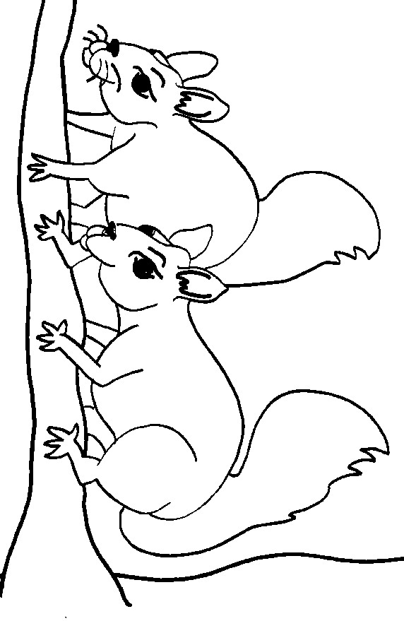 free coloring pages for squrrils - photo#15