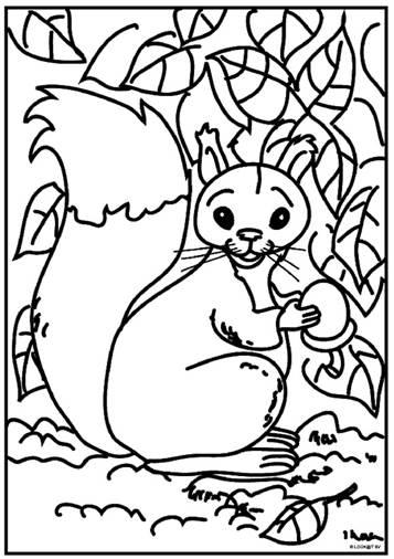 Kleurplaten Dieren Eekhoorn.Kids N Fun 13 Kleurplaten Van Eekhoorn