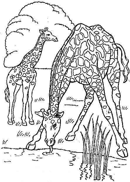 n kleurplaat giraffe giraffe