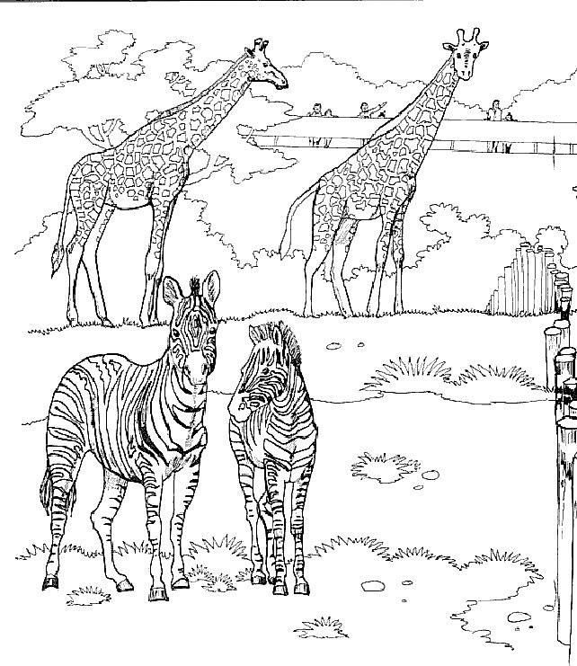 kleurplaten giraffen