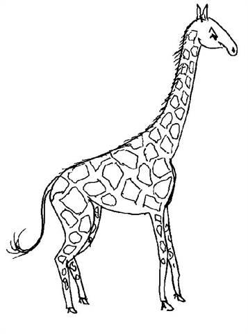 Kleurplaten Giraffen.Kids N Fun 45 Kleurplaten Van Giraffe