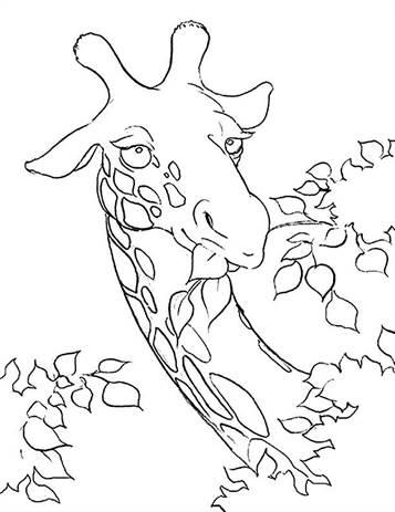 Kleurplaten Giraffen En Olifanten.Kids N Fun 45 Kleurplaten Van Giraffe