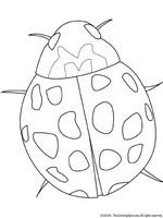 Kids N Fun Kleurplaat Insecten Lieveheersbeestje