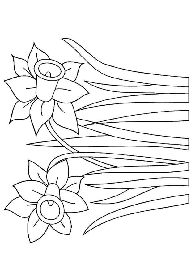 n kleurplaat lente narcissen