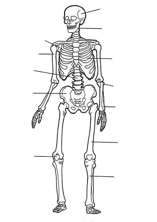 Kids N Fun Kleurplaat Menselijk Lichaam Het Skelet