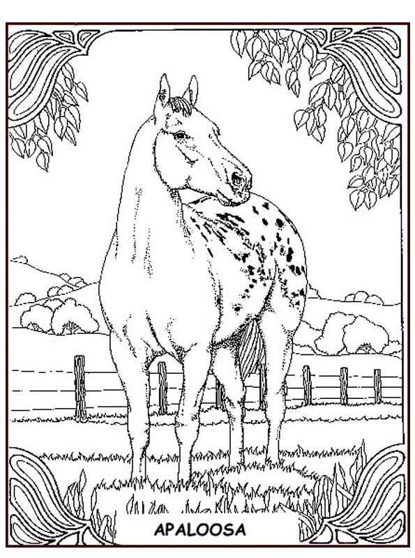 n kleurplaat paarden appaloosa