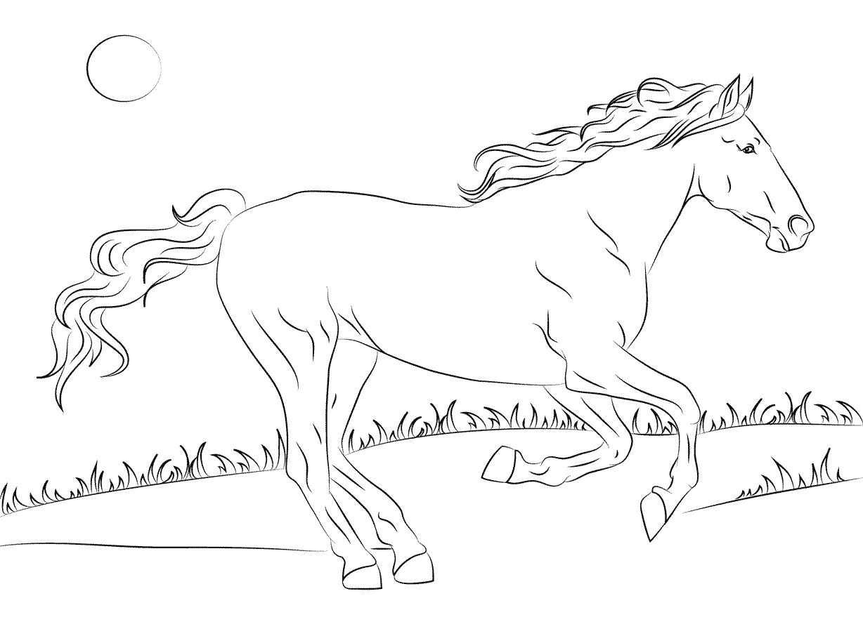 kidsnfun  kleurplaat paarden rassen mustang