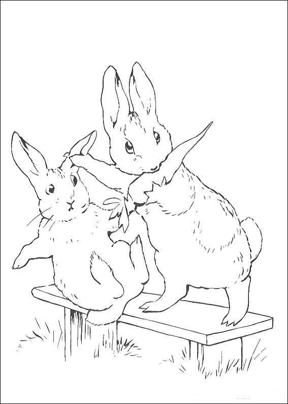 pieter konijn lily tekening