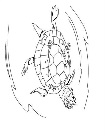 Kleurplaten Voor Volwassenen Schildpad.Kids N Fun 14 Kleurplaten Van Schildpadden