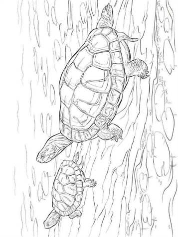 Volwassen Kleurplaat Sinterklaas Kids N Fun 14 Kleurplaten Van Schildpadden