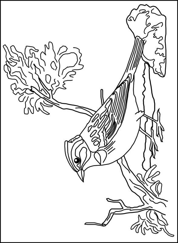 Kids N Fun Kleurplaat Vogels Vogel