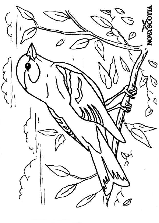 n 38 kleurplaten vogels