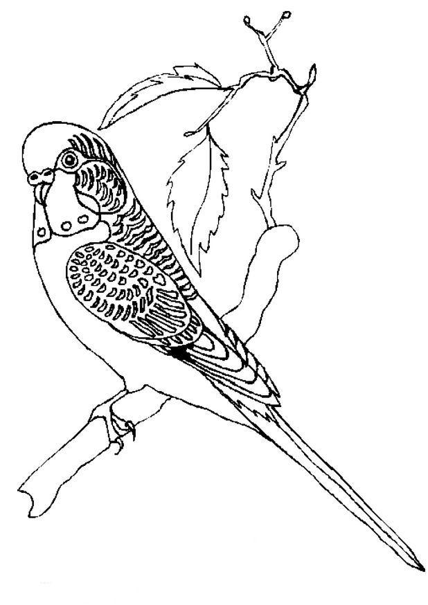Kleurplaten Dieren Vogels.Kleurplaten Vogels Parkiet Nvnpr