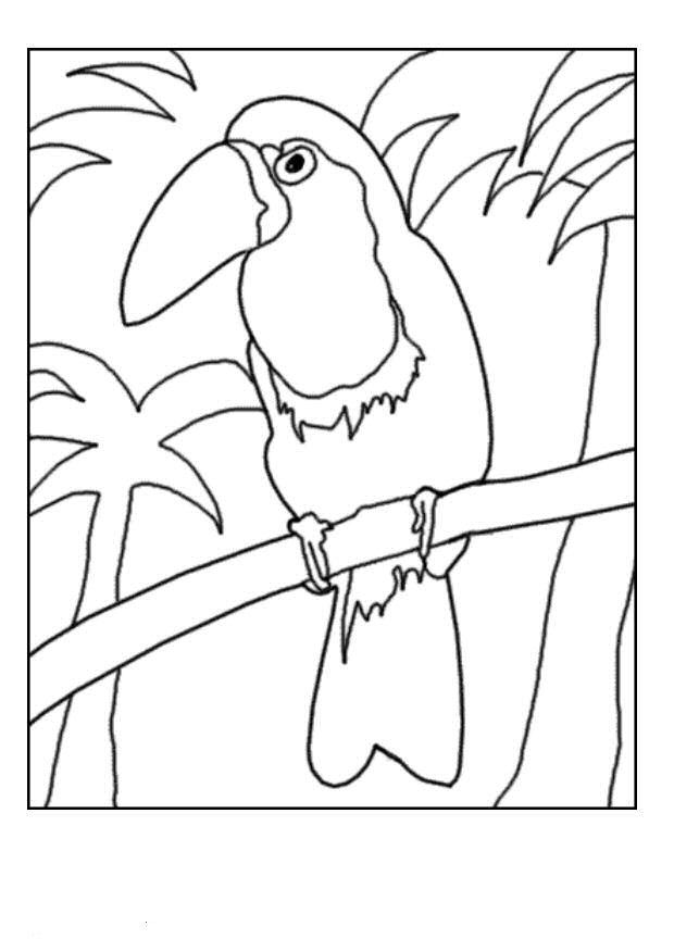 Kids N Fun Kleurplaat Vogels Toekan