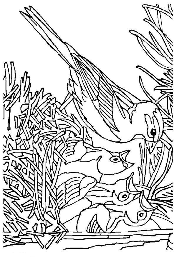 Kids N Fun Kleurplaat Vogels Vogel Met Nest