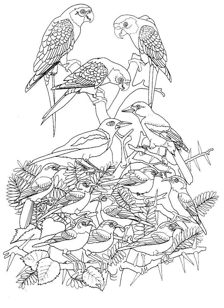 Kleurplaat Vogel Volwassenen Archidev