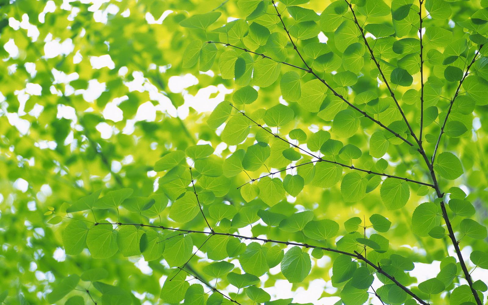 Wallpaper Groene blaadjes - Groene blaadjes: www.kids-n-fun.nl/Wallpaper/Groene-blaadjes/2686/Groene-blaadjes