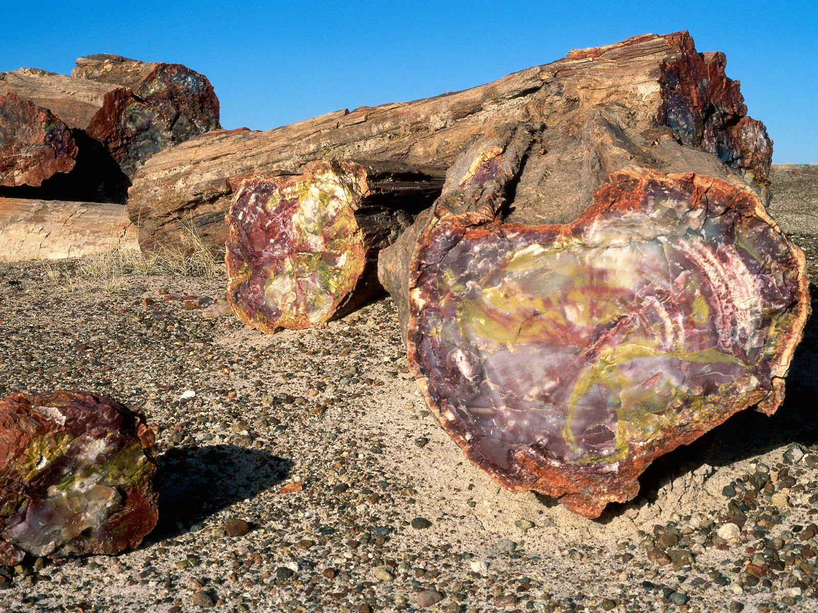 free online personals in petrified forest natl pk Petrified forest national park selected age of the black forest bed, petrified forest member, chinle formation, arizona: an example of dating a.