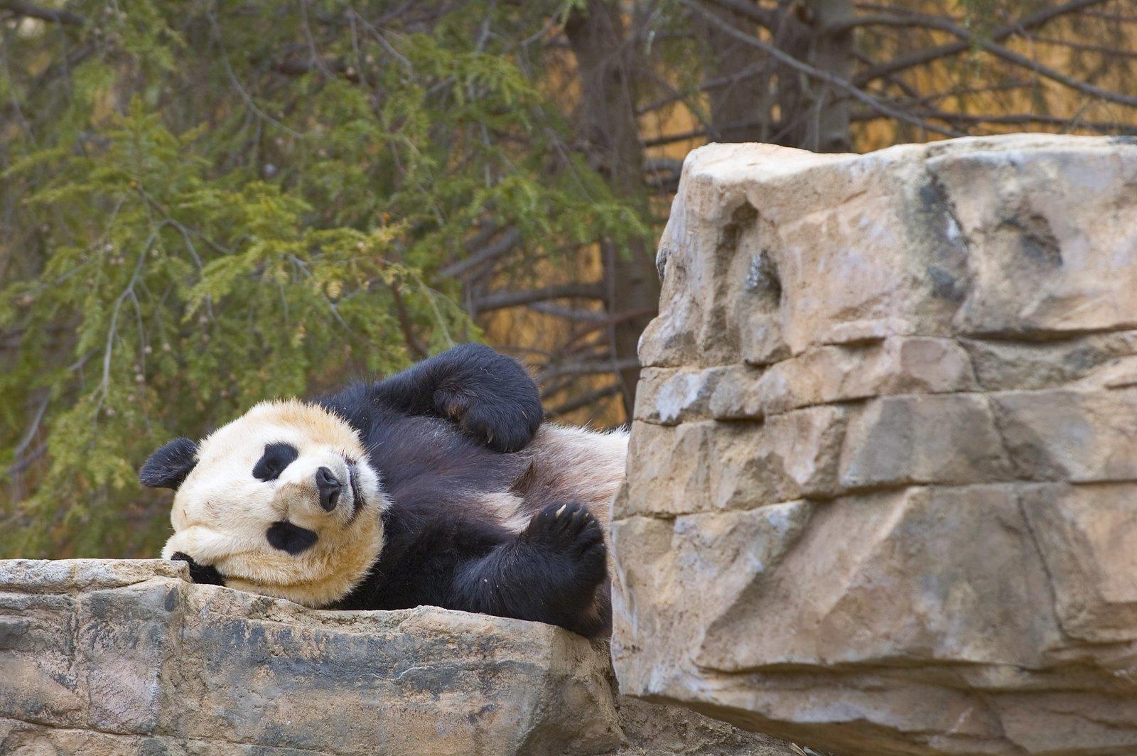 Kids N Fun Wallpaper Panda